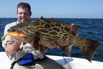 Andreas Holm - Grouper - SG Cutbait Herring1.web