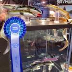 Savage Gear Wins Again Real Eel upright web