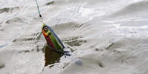 Der Big Swimbait von AR-Lures ist ein Großhechtjäger