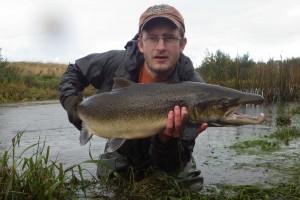 87 cm Delfin Stikling_low_res