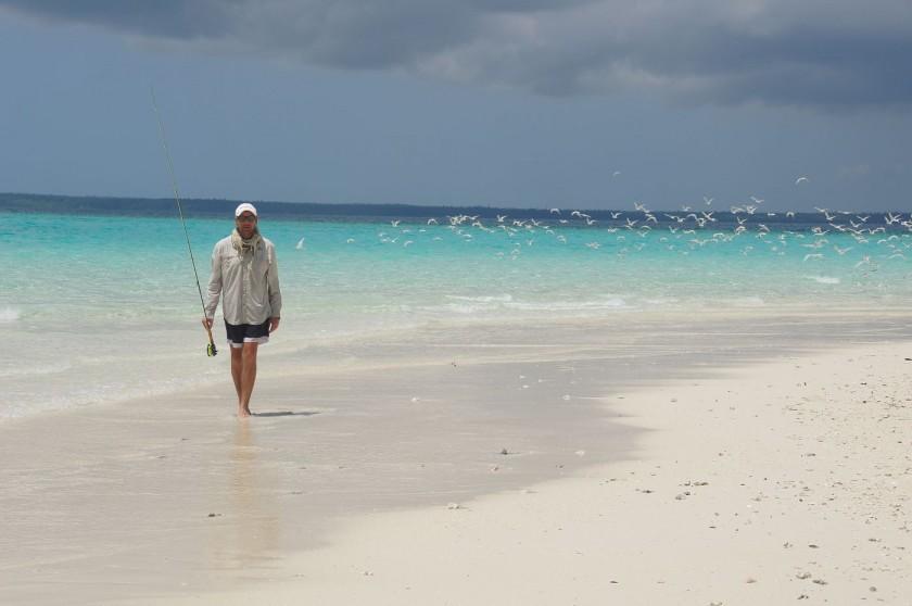 Pardisische Sandinsel mit nur 50x50 Meter und hunderten von Meeresvögeln.