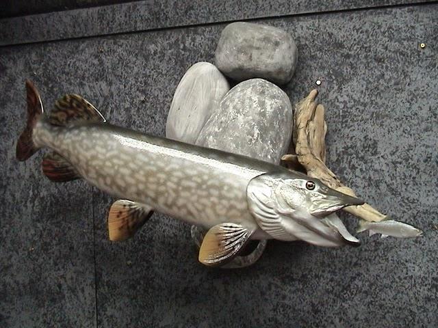 ... oder Hecht samt Beute: die geschnitzten Fische sind täuschend echt.