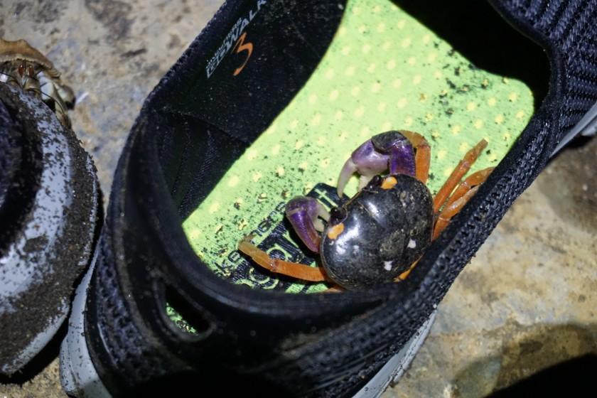 Krabben, Krabben, Krabben - Das, wenn man in den Schuh schlüpft eine Krabbe mal zwickt gehört irgendwie dazu.